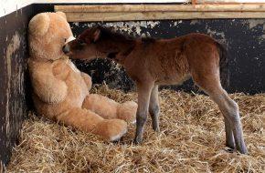 pony orphan