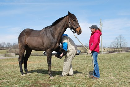 horse check up