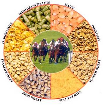 horse-food